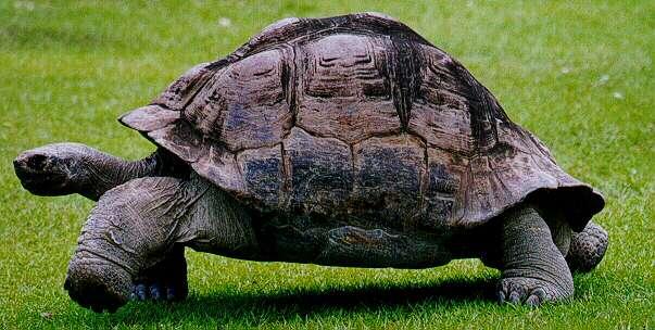 Se les escapó la tortuga