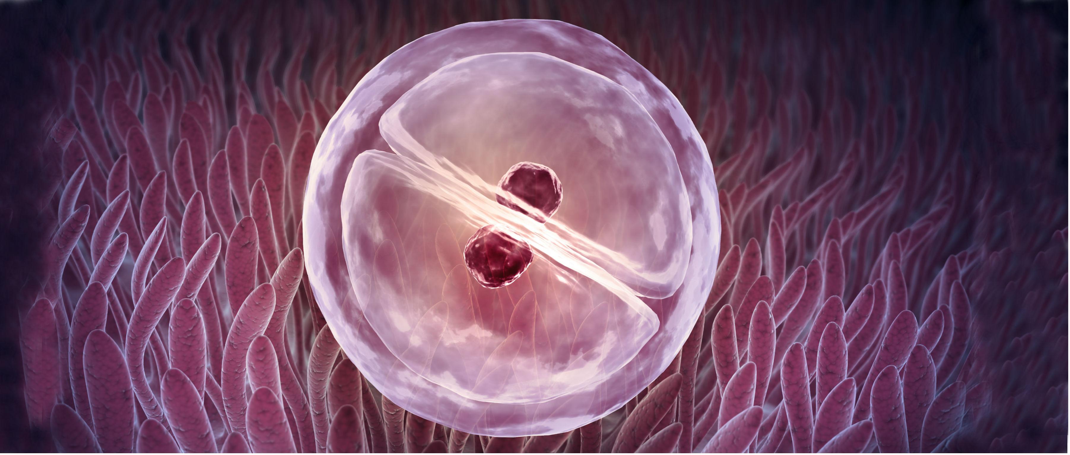 El debate que se viene: qué hacer con los embriones congelados