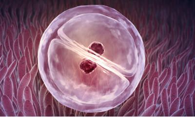 Embrión 1