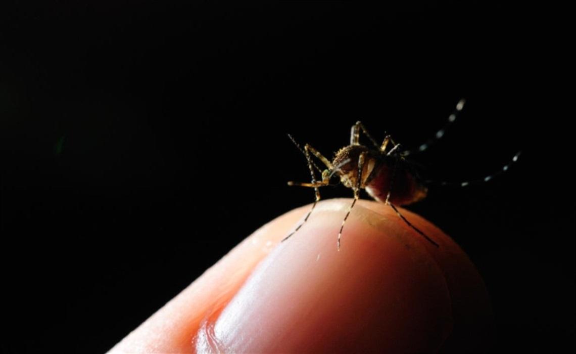 Métodos innovadores y campañas exitosas para combatir el dengue
