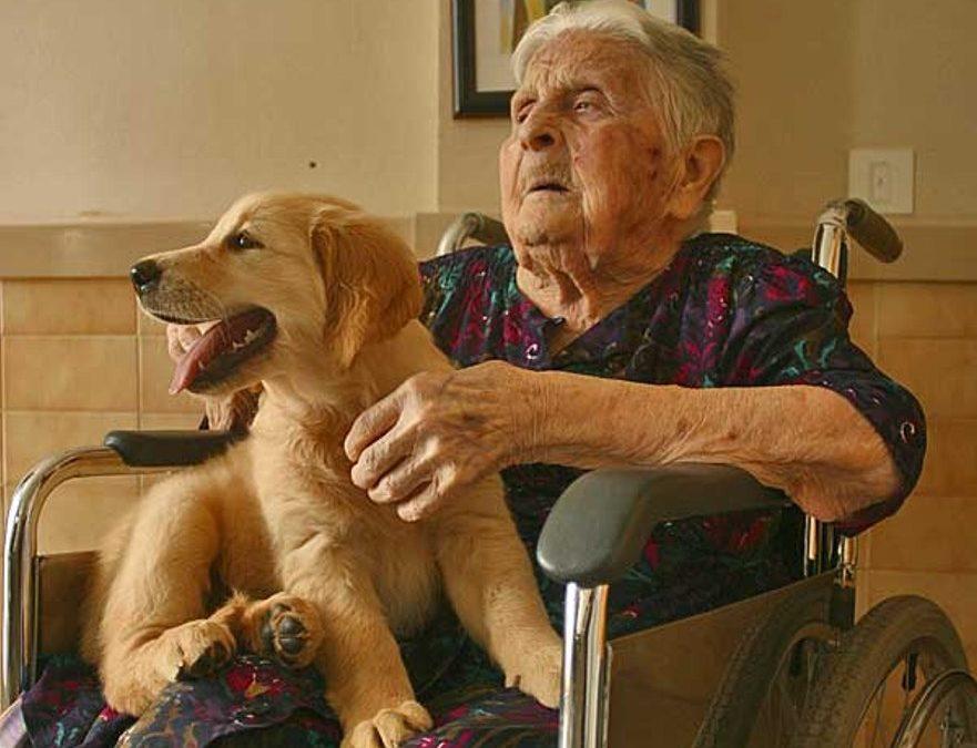 Perros todoterreno: sacan medias y bajan cierres