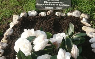 Tendencia: crean cementerios para mascotas y cursos para superar el duelo del animal amado